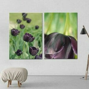2 piece tulip canvas wall art,