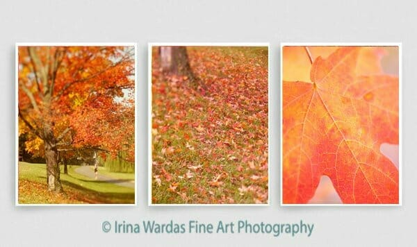 Autumn Wall Art   Orange Coral Red   Tryptich Nature Art Decor