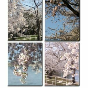 Spring Cherry Blossom Wall Art Set