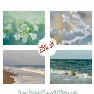 Botanical & Ocean Wall Art Set of 4