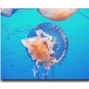 Jellyfish Wall Art | Ocean Underwater Wall Art | Aqua Blue Decor