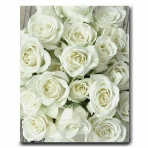 White Roses on Large Canvas Wall Art | French Country Wall Art