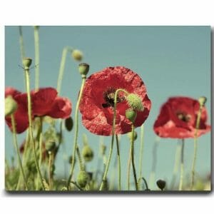 Poppy Flower Wall Art