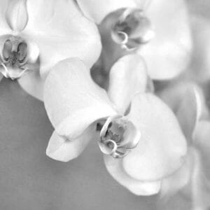 Black and White Orchid Wall Art | Grey & White Floral Wall Decor