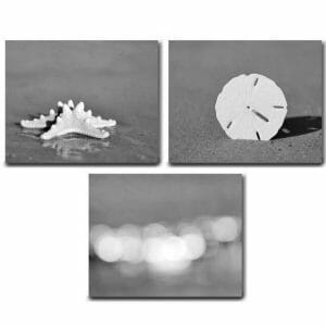 Black and White Canvas Beach Wall Art Set | Shell | Starfish | San Dollar