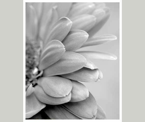 Black White Gerbera Flower Wall Art | Modern Wall Decor | Floral Wall Art