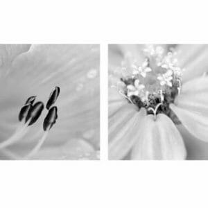 Black and white floral wall art set