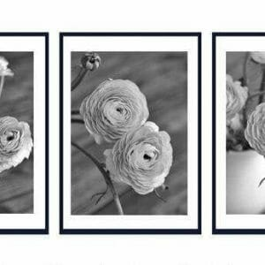 Ranunculus Wall Art Set of 3