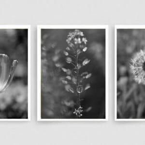 Black White Nature Wall Art Set | Grey Bathroom Botanical Wall Art Set