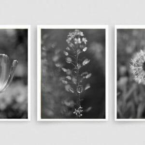Black White Nature Wall Art Set | Grey Bathroom Botanical Wall Art Set