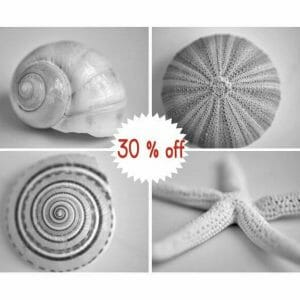 4 Piece Black and White Sea Creatures Wall Decor