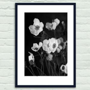 Black and White Botanical Wall Art | Anemone Flower | Floral Wall Art