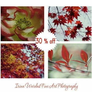 Red Leaf Wall Art | Botanical Nature Wall Decor | Modern Wall Art