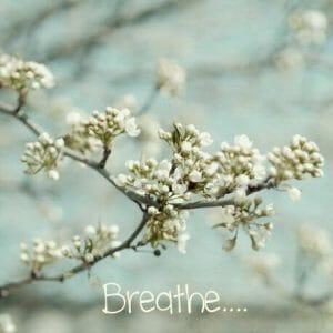 Spring Blossom Wall Art