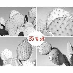 Black and White Cactus Wall Art | Set of 4 | Succulent Wall Decor