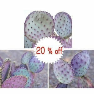 3 Piece Desert Cactus Wall Art