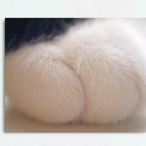 Cat Paw Wall Art