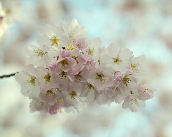 Spring Tree Branch Photo Meditation