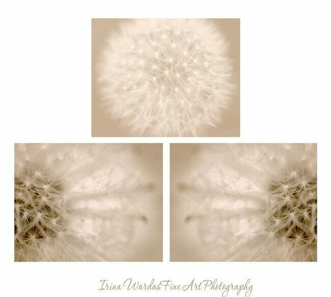 Dandelion Flower Wall Art | Abstract Floral Wall Decor | Beige Brown