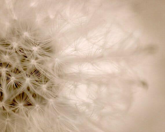 Abstract Dandelion Photography | Light Beige Modern Floral Wall Art