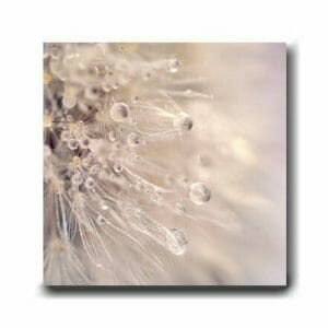 Dandelion Wall Art | Neutral Beige | Bathroom Bedroom Home Wall Decor