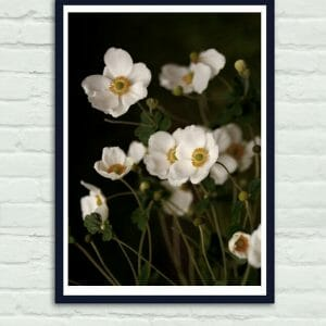 Anemone flower botanical wall art