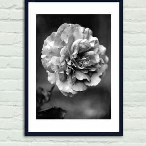 Black And White Rose Wall Art | Grey Floral Art Decor | Living Room Wall Art