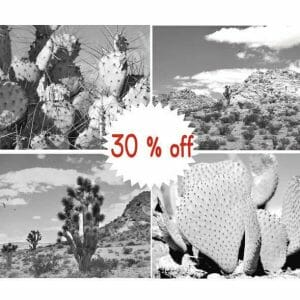 Black and White Cactus Wall Decor