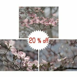Dogwood Tree Branch Flower Wall Art | Pink Grey Nursery Wall Art