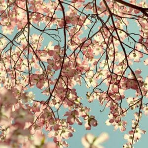 Dogwood Tree | Light Pink Wall Art | Spring Art Decor | Floral Wall Art