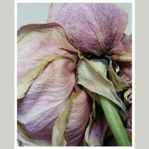 Vintage Rose Wall Art | Vertical Boho Floral Wall Art | Dry Rose Wall Decor
