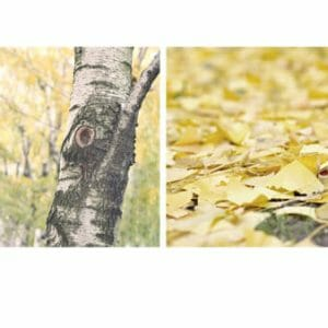 Fall Photography Wall Art | Set of 2 | Yellow Nature Wall Decor