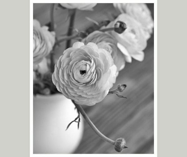 Black and White Ranunculus Flower Wall Art