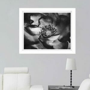 Black and White Rose Wall Art