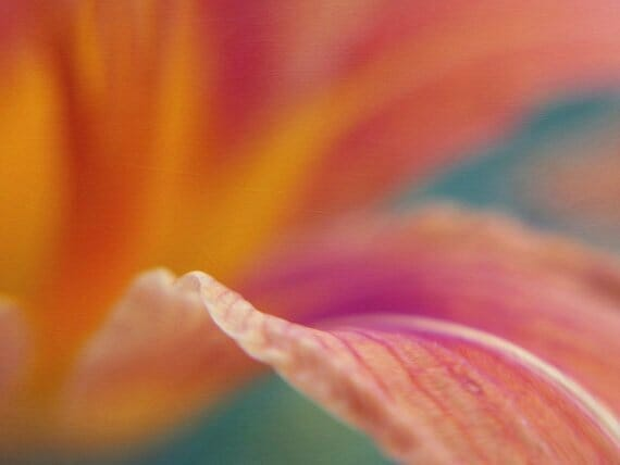 Colorful Day Lily Wall Art