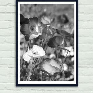 Black and White Poppy Flower Wall Art
