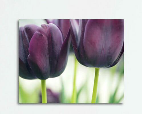 Burgundy Tulip Wall Art