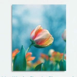 Colorful Tulip Wall Decor