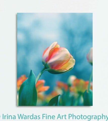 Colorful Tulip Wall Decor