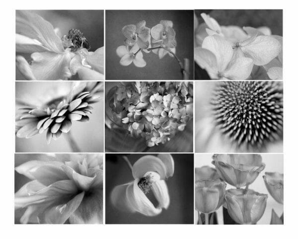9 Piece Floral Wall Art Set | Black and White Floral Wall Decor Set of 9