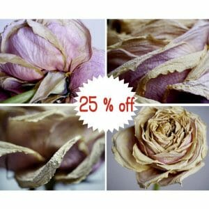 Dry Rose Floral Wall Art | Set of 4 | Dry Flower Wall Art | 25% Discount