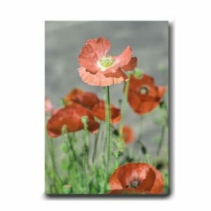 Poppy Flower Wall Art Photography | Large Vertical Wall Art