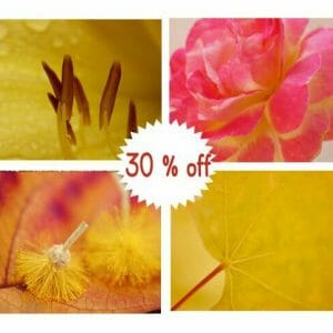4 Piece Macro Nature Wall Decor
