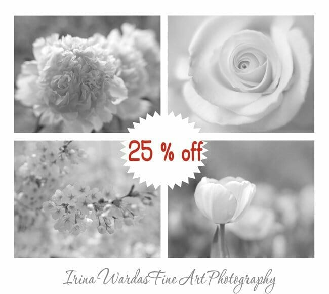 4 Piece Black and White Flower Wall Art