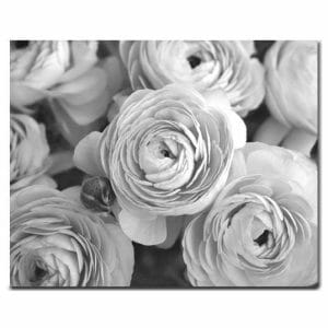 Black & White Ranunculus Flower Wall Art