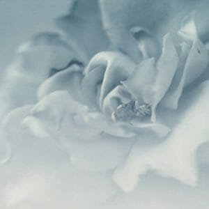 Silver Grey Flower Wall Decor