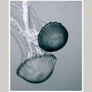 Jellyfish Wall Art | Vertical Bathroom Wall Decor | Ocean Animal Wall Art