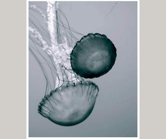 Jellyfish Wall Art | Vertical Bathroom Wall Decor | Ocean Animal Wall Art
