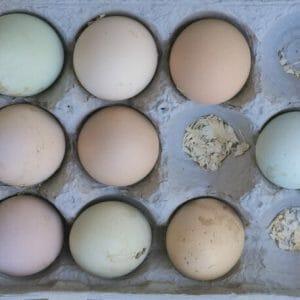 Kitchen Egg Wall Art