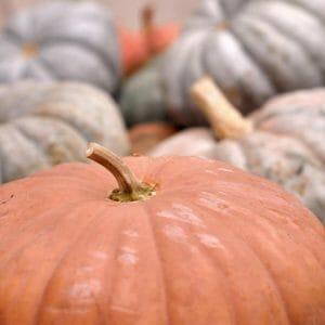 Autumn Pumpkin Wall Art | Orange Grey | Farmhouse Chic Wall Decor